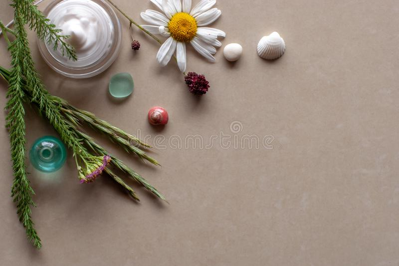 Flat view. Still life of plant twigs, chamomile pebbles and seashells. Spa. Background brown ceramic tile. There is a place for text royalty free stock photo