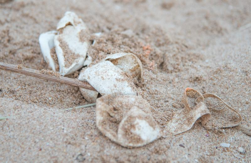 Flatback在沙丘的海龟鸡蛋 库存图片