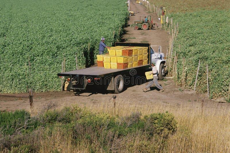 Flatbed vrachtwagen stock afbeeldingen