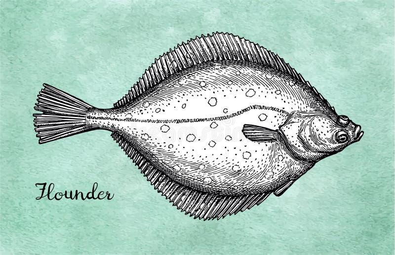 flatfish Esboço da tinta da solha ilustração royalty free