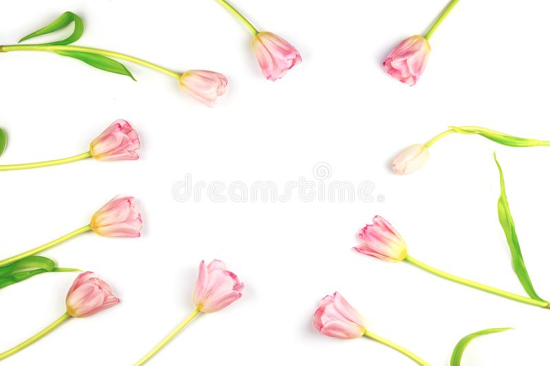 Flatlay with frame made of pink tulips. Spring arrangement. Flowers background with copyspace royalty free stock photos