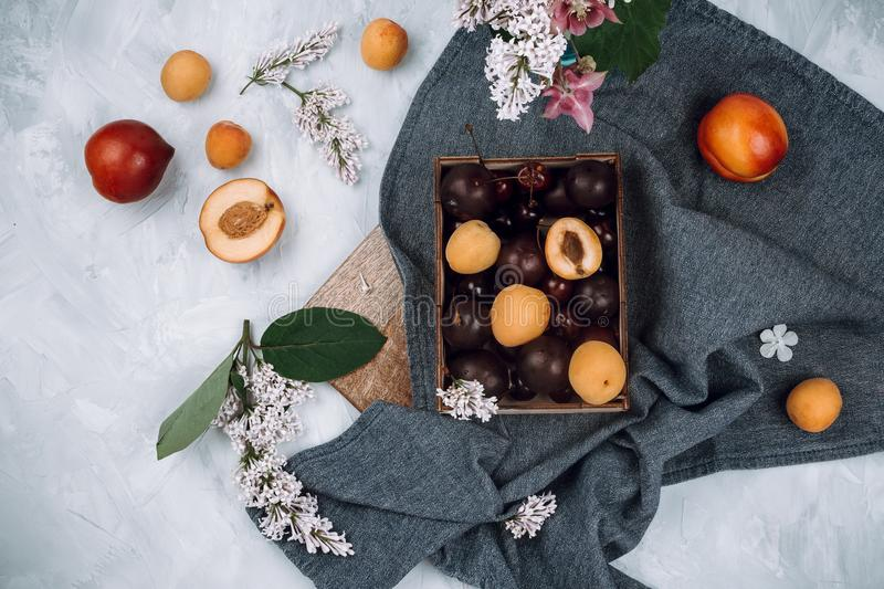 Flatlay of fresh organic plums and berries and other fruits and flowers on blue towel royalty free stock image