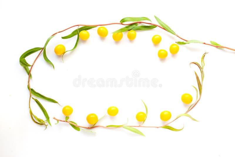 Flatlay het kadermodel van de schoonheids geel zomer, Geschikt als prentbriefkaar voor de dag van uw moeder, 8 Maart, of St Valen royalty-vrije stock foto's