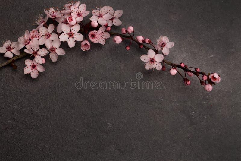 Flatlay Japoński czereśniowy okwitnięcie na zmroku popielatym marmurze z kopii przestrzenią fotografia royalty free