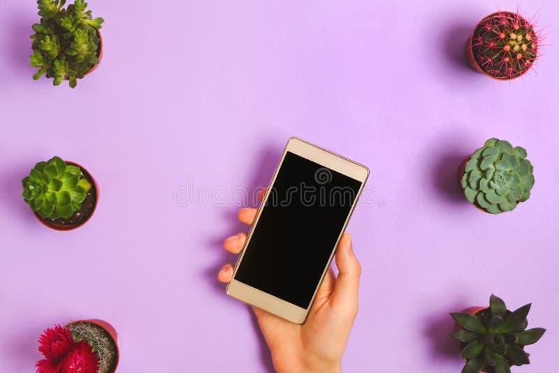 Flatlay mit der Frauenhand, die Smartphone und verschiedene Succulents auf purpurrotem Hintergrund hält lizenzfreies stockbild