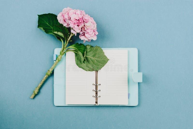 Flatlay van roze hortensiabloem en blauw notitieboekje stock afbeeldingen