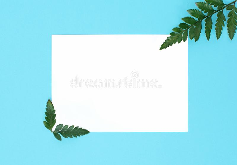 Flat lay on blu background with white paper sheet for text and fern leaves, top view, space for text, copy space, royalty free stock photography