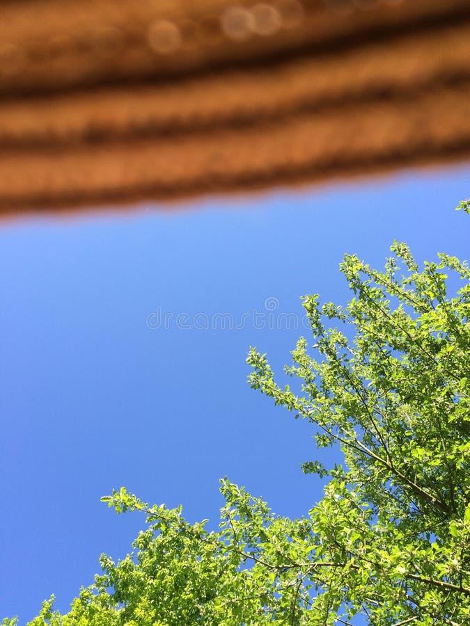Flattern Sie Sonnenhut mit Baum und blauem Himmel stockfotografie