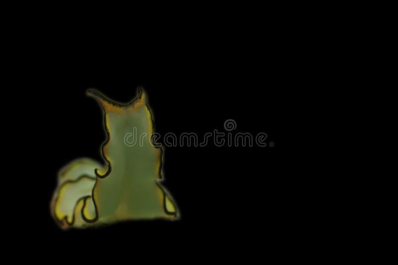 flatworm royaltyfri fotografi