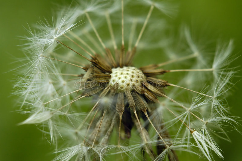 Flaumige Blume lizenzfreie stockfotos