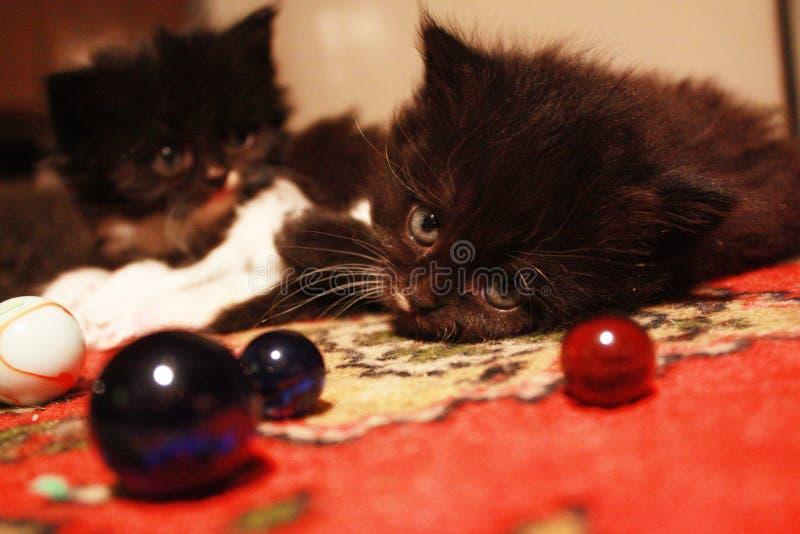 Flaumige Kätzchen und Glaskugeln lizenzfreies stockfoto