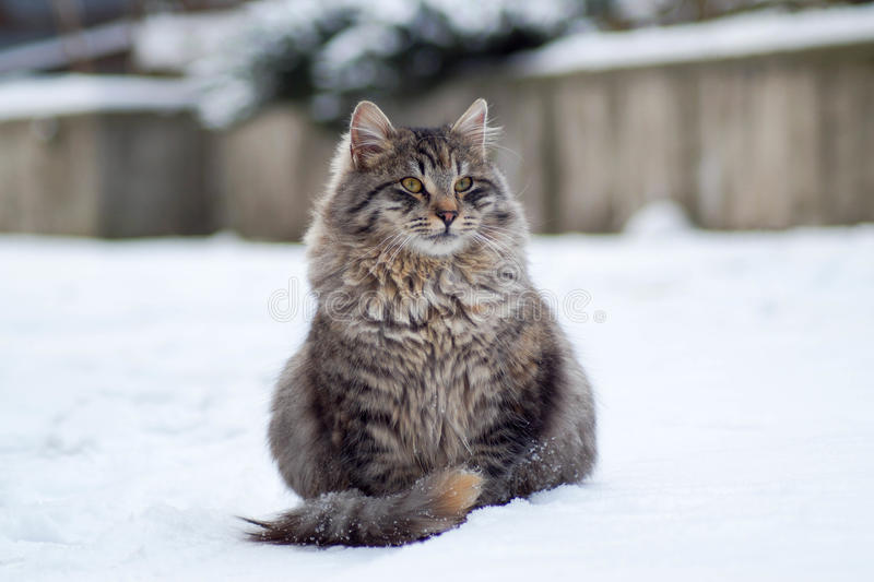 Flaumige Katze lizenzfreies stockfoto