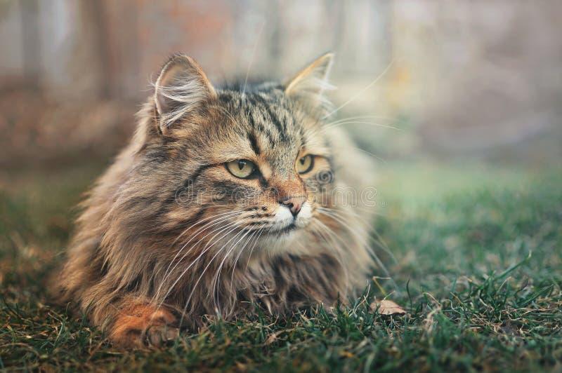 Flaumige Katze, die in einem Garten sich entspannt lizenzfreie stockfotos