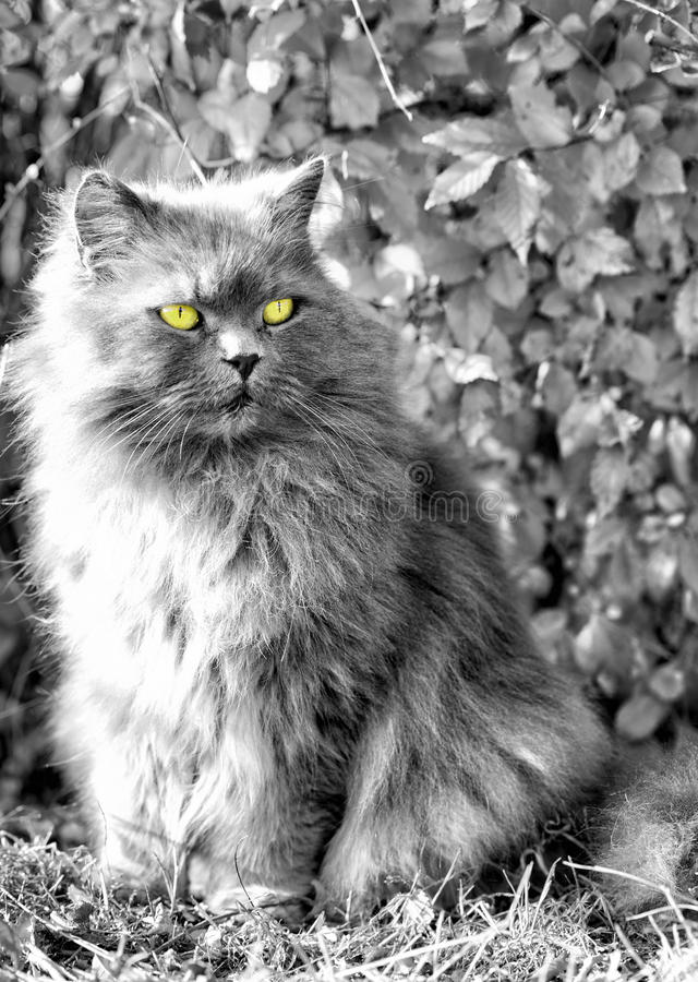 Flaumige Katze, die weg schaut lizenzfreies stockfoto