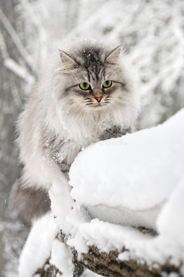 Flaumige neugierige Katze im Winterpark lizenzfreie stockbilder