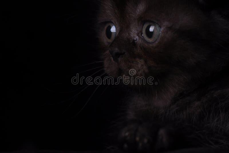 Flaumiges schwarzes Kätzchen auf einem schwarzen Hintergrund Foto im Studio stockfoto