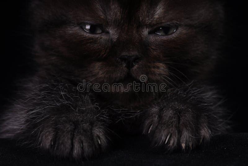 Flaumiges schwarzes Kätzchen auf einem schwarzen Hintergrund Foto im Studio lizenzfreie stockbilder