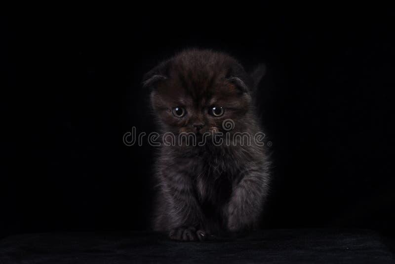 Flaumiges schwarzes Kätzchen auf einem schwarzen Hintergrund Foto im Studio stockbild