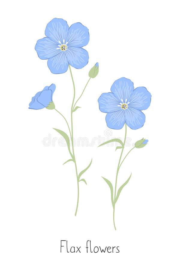 Flax flowers isolated on a white background. Summer plants. Flax flowers isolated on a white background. Blue flowers with green leaves. Summer plants. Vector vector illustration