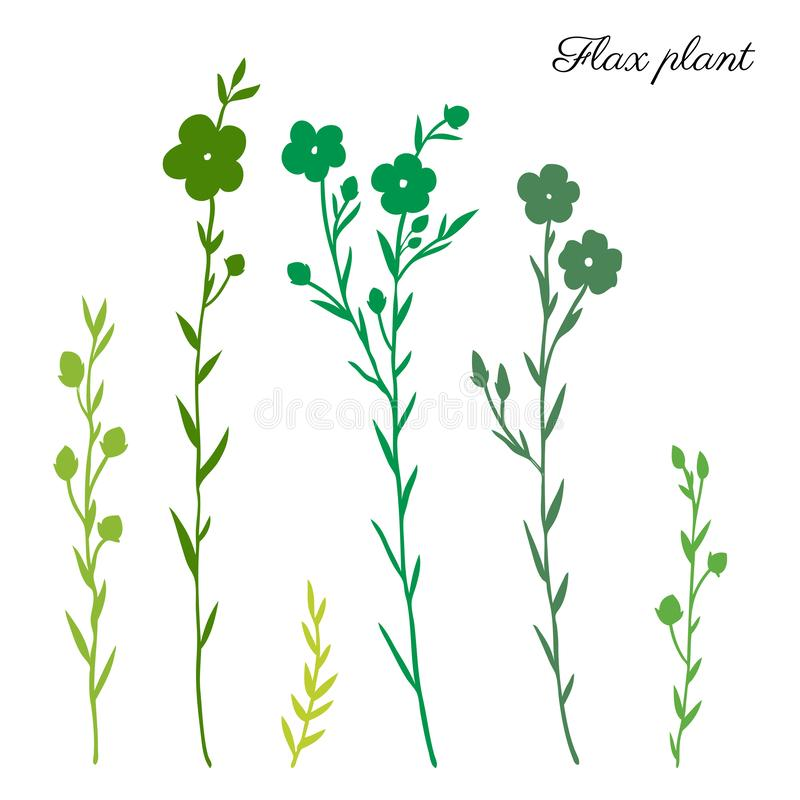 Flax plant, wild field flower green silhouette isolated on white, botanical hand drawn sketch vector illustration, for royalty free illustration