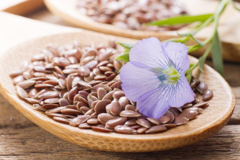Flaxseed med dess blomma royaltyfri foto