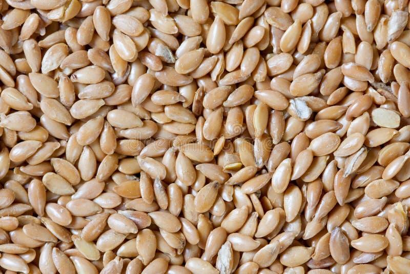flaxseed złoty obraz stock