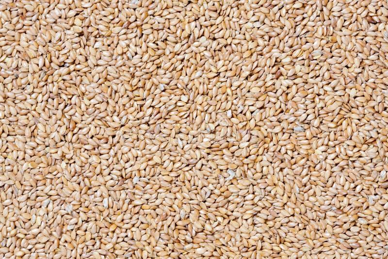flaxseed złoty zdjęcia stock