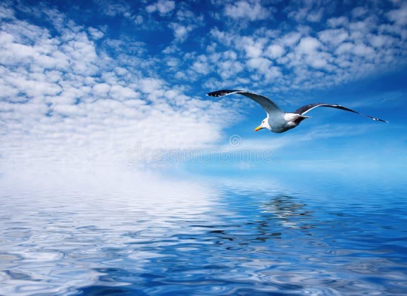 flaying чайка стоковое фото rf