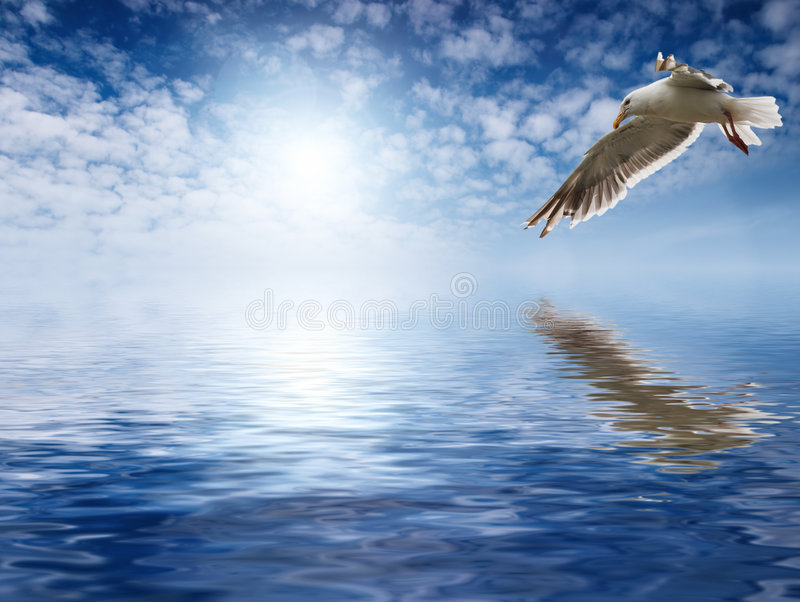 Download Flaying seagull stock image. Image of ocean, reflection - 2070107