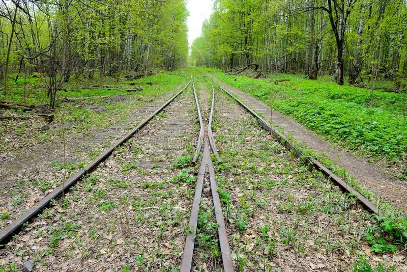 Flecha de un ferrocarril abandonado viejo que pasa en el bosque imagen de archivo libre de regalías