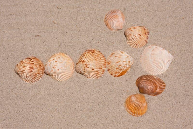 Flecha del Seashell que señala la manera foto de archivo libre de regalías