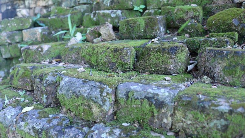 Flechte auf altem Gebäude der alten Wand stockfotos