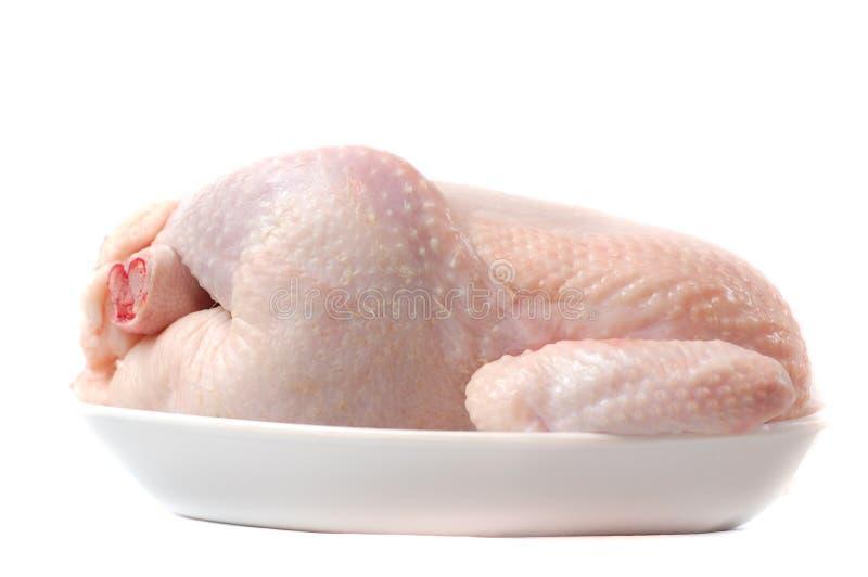 Fleisch einer Henne. stockfotografie