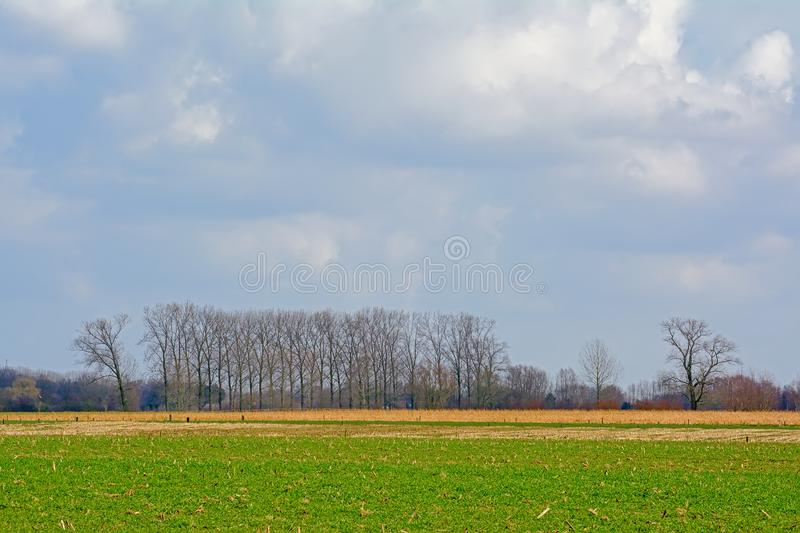 Flemish agrarian fields and alder and willow trees royalty free stock photography