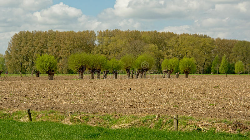 Flemish spring farmland landscape stock photography