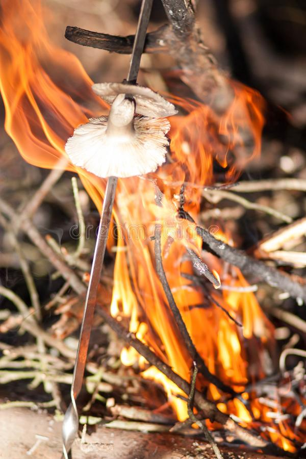 Flera champinjoner är förberedda på en brinnande brand i en höstskog royaltyfria foton