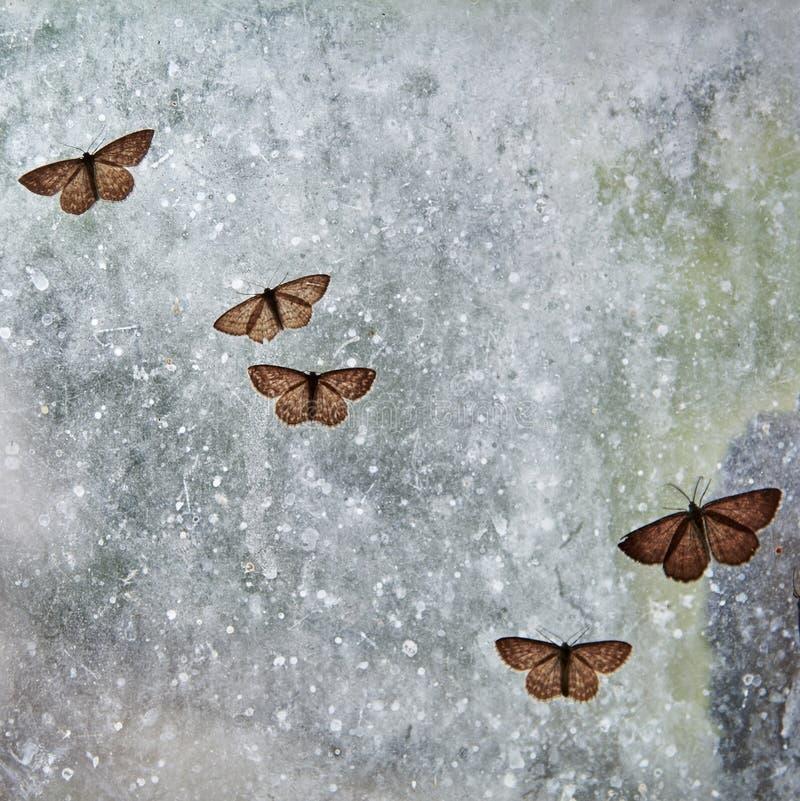 Flera malar sitter på ett smutsigt fönster, kryp fångas id?rik bakgrund royaltyfri bild