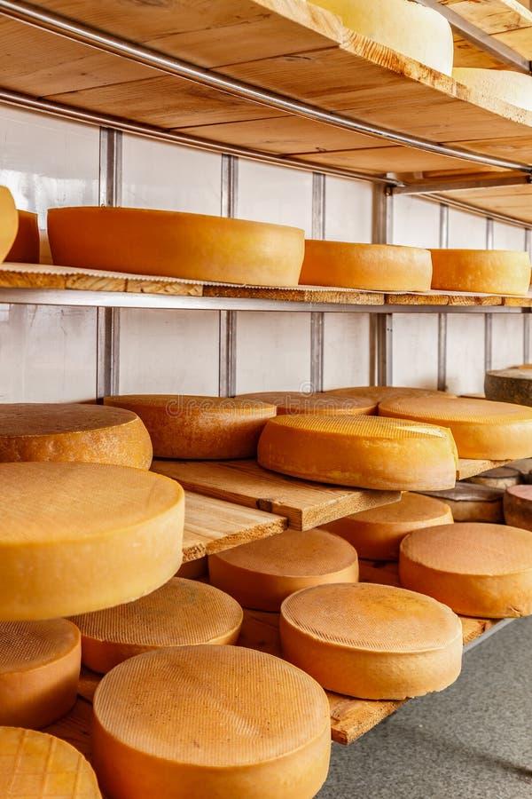 Flera mogna ost-hjul fotografering för bildbyråer