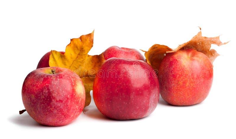 Flera mogna saftiga röda äpplen med höstsidor på isolerad bakgrund arkivbilder