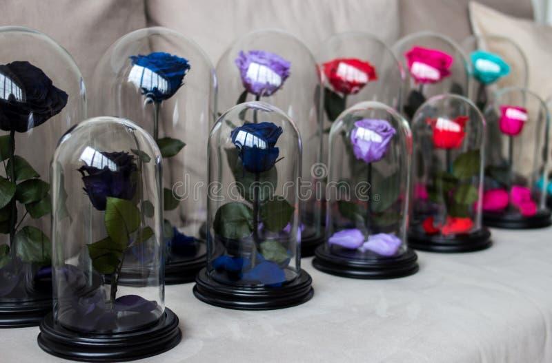 Flera rosor i en flaska Slitstarkt steg bevarat royaltyfri bild