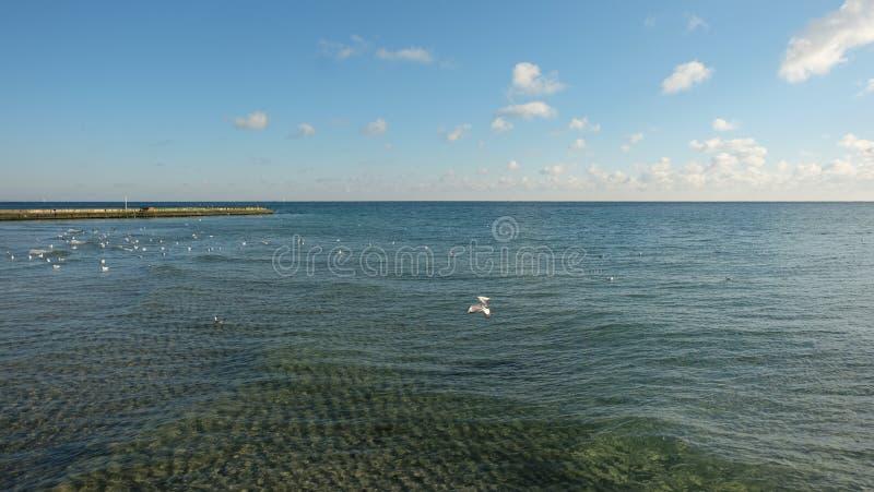 Flera seagulls som mejar över ett lugna hav, på bakgrunden av en blå himmel med moln arkivbild