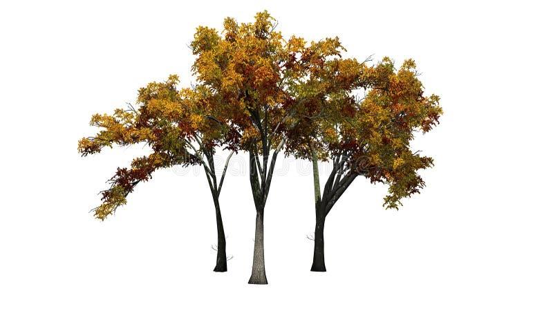 Flera träd för amerikansk alm i hösten vektor illustrationer