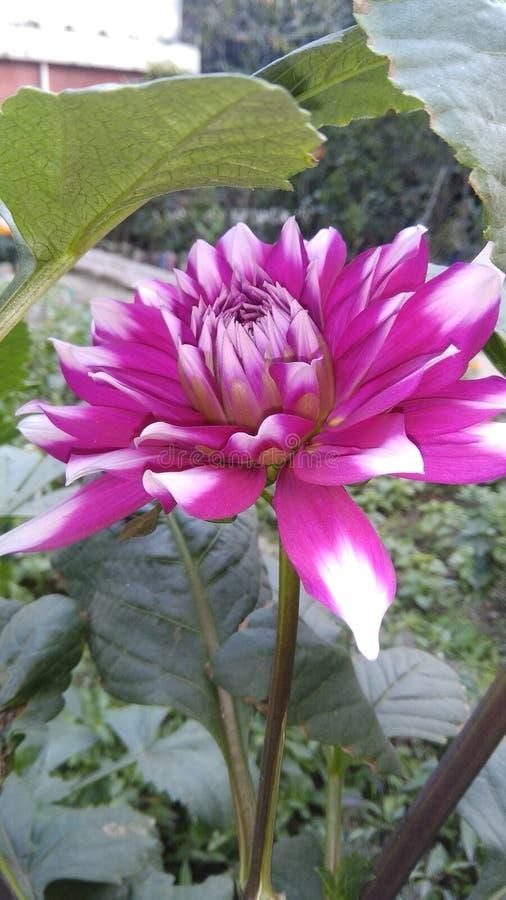 Flerfärgad blommavintersäsong royaltyfri bild