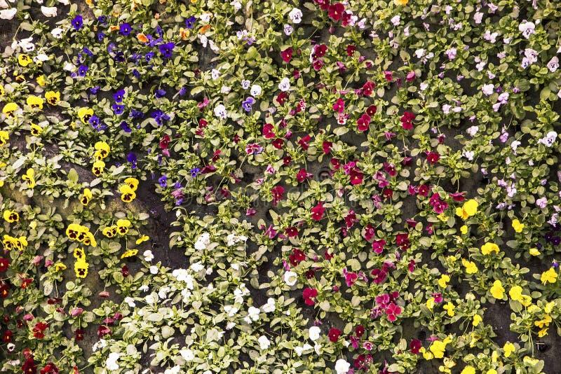 Flerfärgade blommor på vertikal trädgård royaltyfria bilder