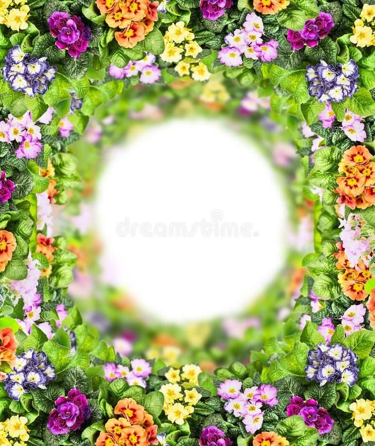 Flerfärgade blommor rundar med gröna sidor gränsar, isolerat på vit royaltyfri fotografi