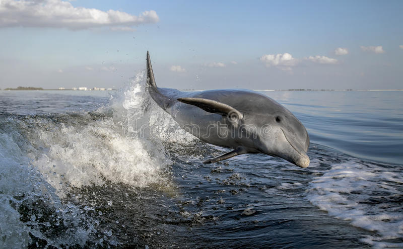Fles Besnuffelde Dolfijn royalty-vrije stock fotografie