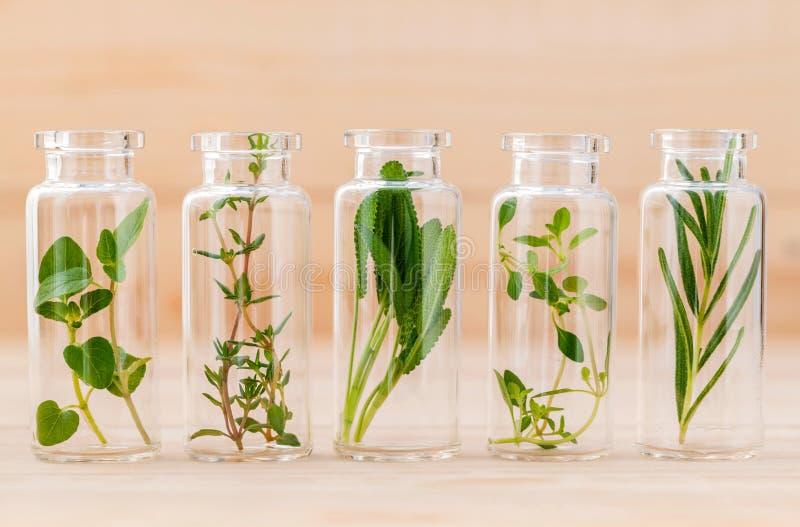 Fles de thyme van de etherische oliecitroen, thyme, orego, rozemarijn stock foto's