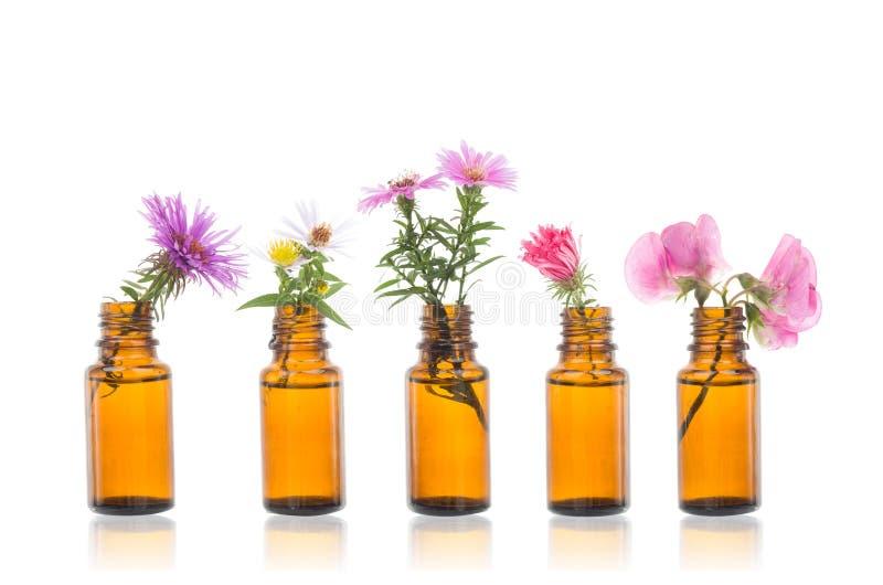 Fles etherische olie met kruiden stock foto's