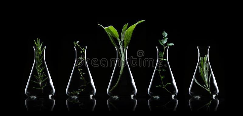 Fles etherische olie met kruidenrozemarijn, oregan thyme, wijs, royalty-vrije stock afbeeldingen