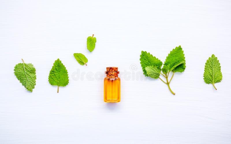 Fles etherische olie met verse de bladerenopstelling van de citroenbalsem met royalty-vrije stock afbeeldingen